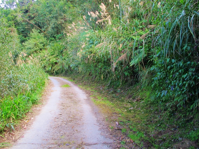 Short-grass verges and shady areas at Tengjhih, particularly along the brown trail, are a good bet for birds like White-tailed Robin, and may turn up more unusual species such as Red-flanked Bluetail, Siberian Rubythroat, Collared Bush Robin, Taiwan Shortwing and Scaly Thrush.