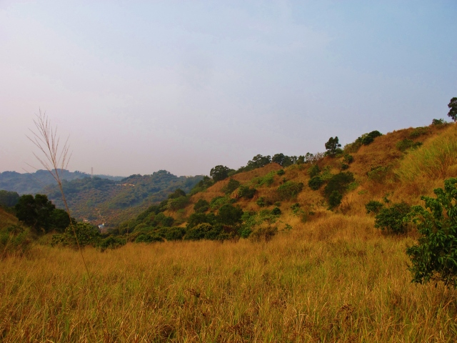 Grassy hills north of Highway 22 and west of Highway 21, location of an unsuccessful search for Striated Prinia.