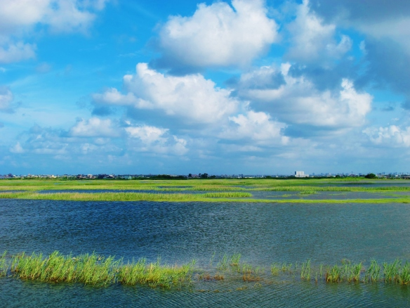 Cheting Marshes: from dried-out dust bowl to lush marshland in just three months.