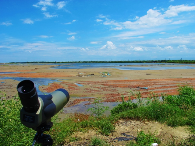 "Birding at Budai's ""flamingo pools"", alongside Expressway 61 at Km 276."
