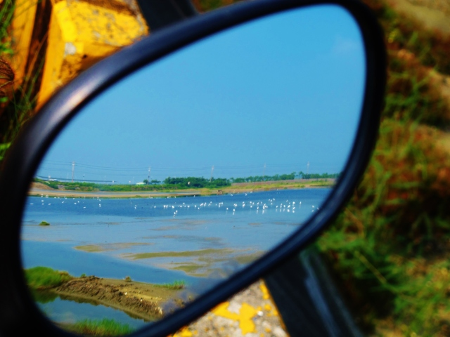 View in my scooter's mirror of the wetlands at Km 134.5 on Highway 17, which today were absolutely teeming with egrets, terns and passage waders.