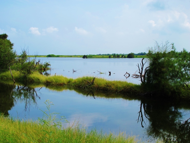Aogu Wetlands: a beautiful spot, but somewhat lacking in birds today.